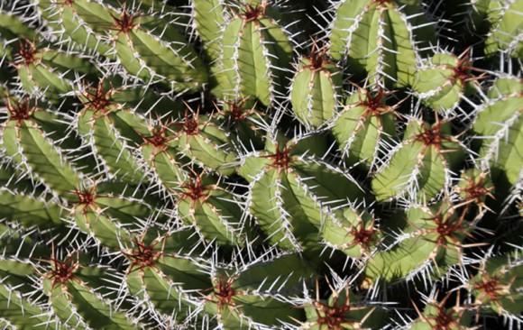 Wieghorst Cactus Garden 1