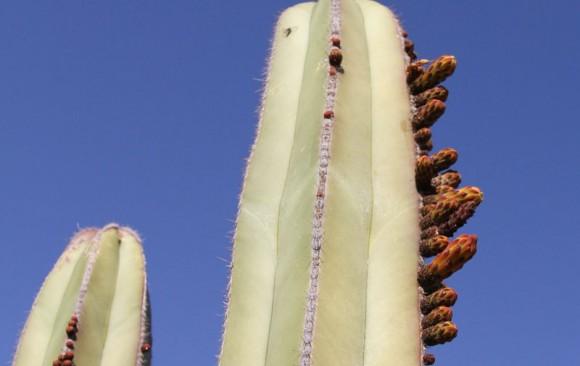 Wieghorst Cactus Garden 2