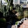 Wieghorst Cactus Garden 3