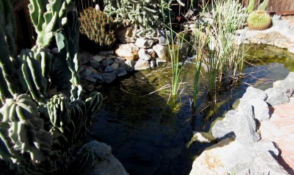 Wieghorst Cactus Garden 5